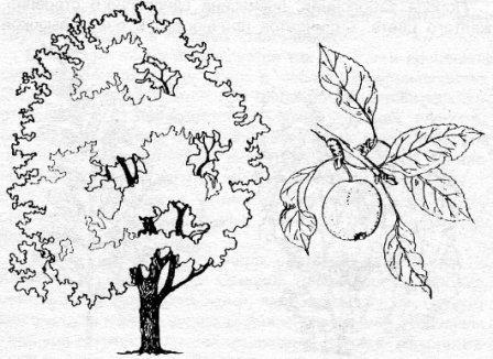 Изображения Дерево Яблоня Рисунок / tonpix.ru